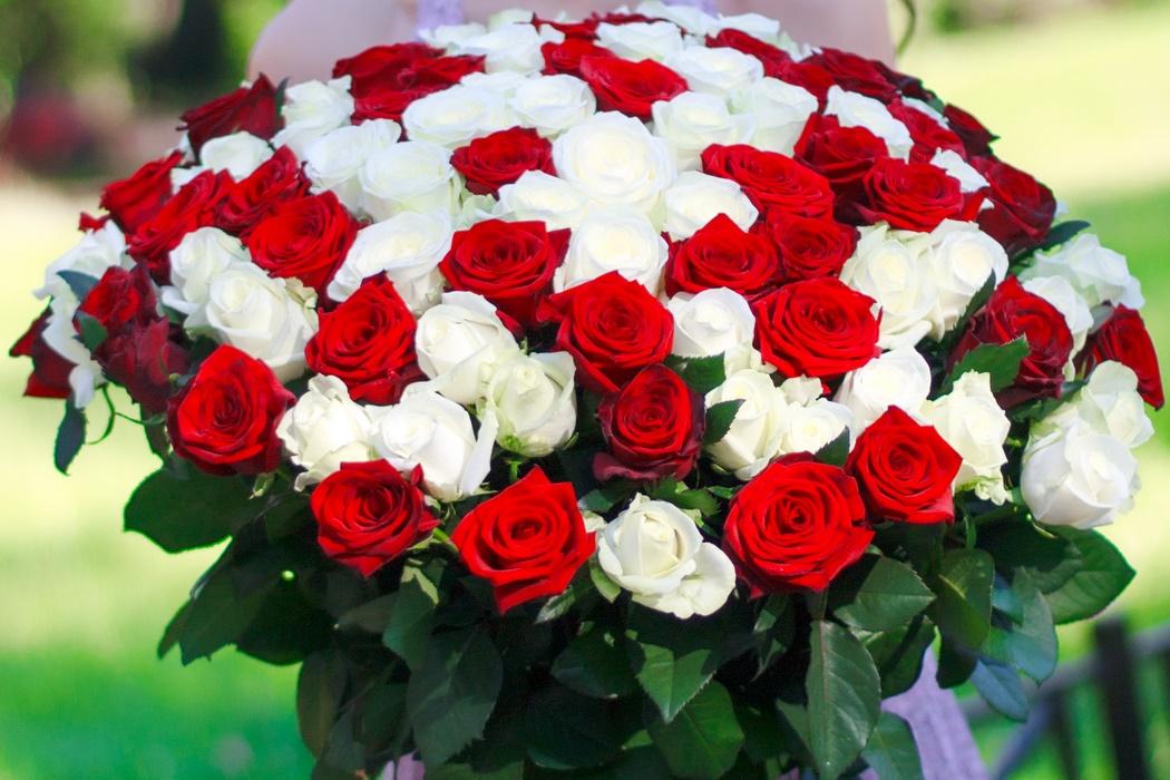 букет из белых и алых роз фото тем как обратиться